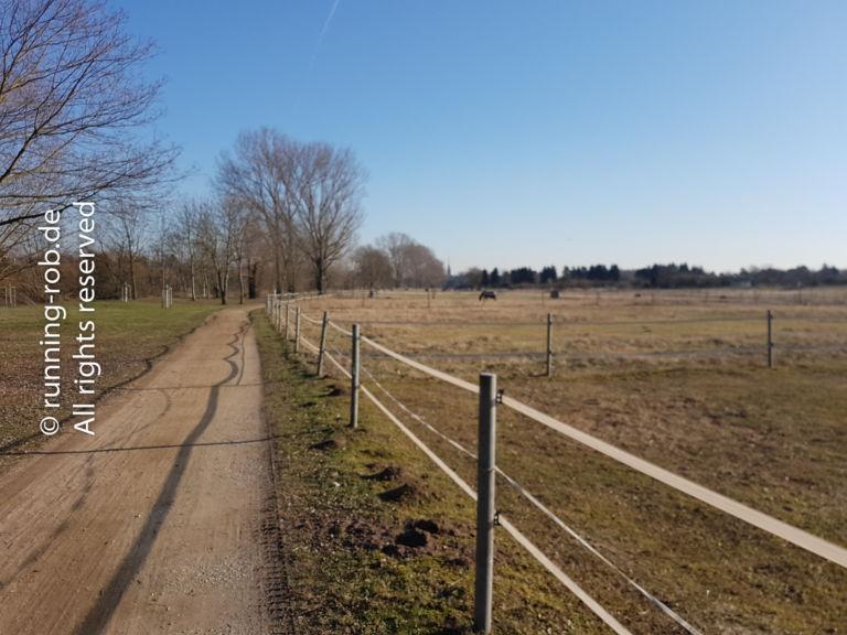 Feldweg im Winter unter blauem Himmel